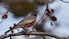 _2270042 American Robin in Tree_3840x2160
