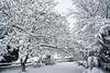 _DSC9664 April 29 Snow_7952x5304