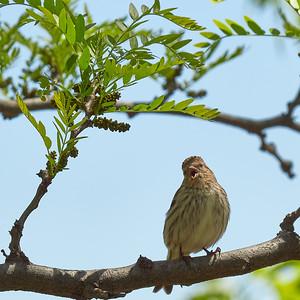 2017-05-12 • E-M1.2+50-200/2.8-3.5 SWD - Backyard Birds