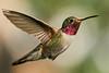 _DSC1663 Hummingbird_2800x1866