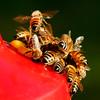 _DSC9012 Bees 1600x1600 OOC