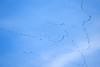DSC08280 Distant Migrating Sandhill Cranes_2984x1989