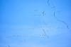 DSC08245 Distant Migrating Sandhill Cranes_3899x2596