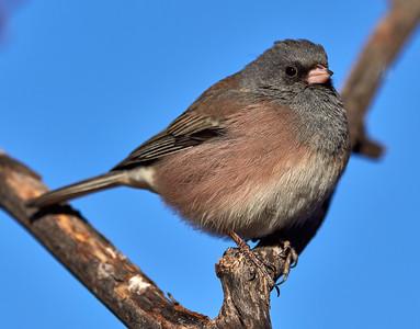 2018-01-16 • E-M1.2+300/4.0 PRO - Backyard Birds
