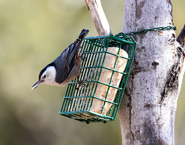 2018-02-28 • E-M1.2+300/4.0 PRO - Backyard Birds • FW 2.0 & 1.4