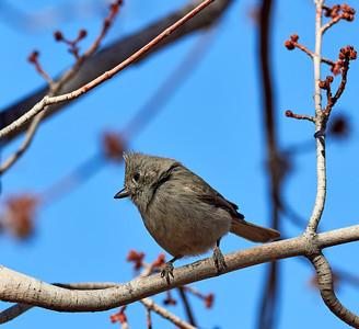 2018-03-06 • E-M1.2+300/4.0 Pro - FW 2.0 • Backyard Birds