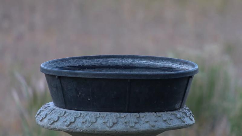 C00021_2_Black-Headed Grosbeak