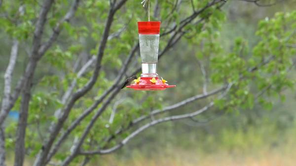 Hummingbird videos