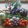Fresh organic vegetables from our gardens direct to your table