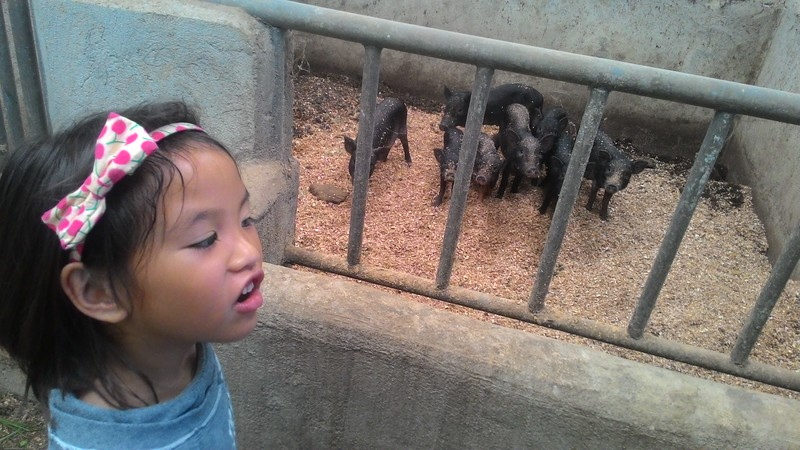 Visiting the neighbors piggery. We don't raise pigs but Chin Chin wanted to visit them