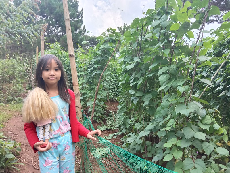 Chin Chin Visiting George's Farm. Fantastic Yard long beans.