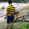 Watch Video of the BAMBOO harvest. Hard work but FUN FUN FUN