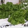 Hydroponic Fertilizer Mix Recipe