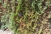IMG_20120630_05009_Wasp_Nest