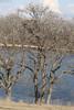 img_20130429_30279_nesting_eagle_on_bailey_lake_distance-vc
