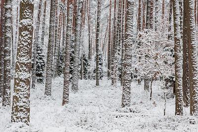 Zimowy las, 003