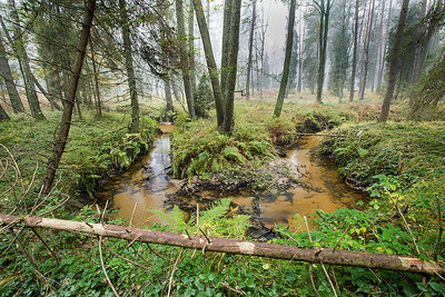 Leśny potok 001