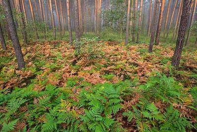 Jesienny las 005
