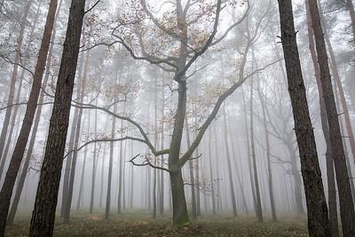 Jesienny las 007