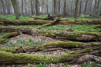 Leśna dąbrowa