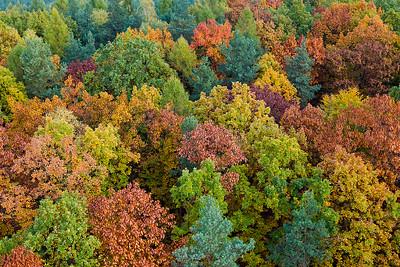 Jesienny las, 001