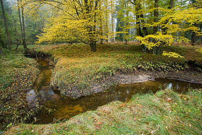 Leśny potok 002