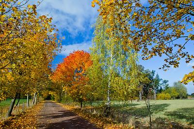 Jesień, 001