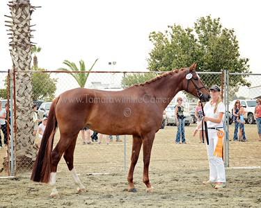 KWPN 15 Gamebria DG 9530