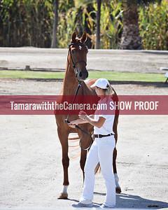 KWPN 18 Kamebria DG 9115