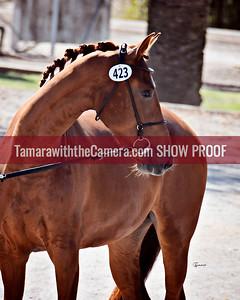 KWPN 18 Kamebria DG 9118