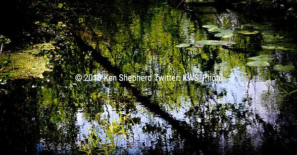 Shimmering Swamp