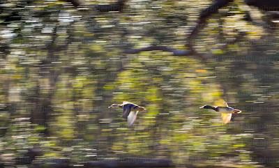 Turbo Ducks