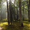ForestPanorama.jpg