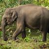 Elephant10.jpg