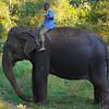 Elephant4.jpg