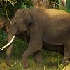 Elephant8.jpg