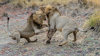 Brothers fighting