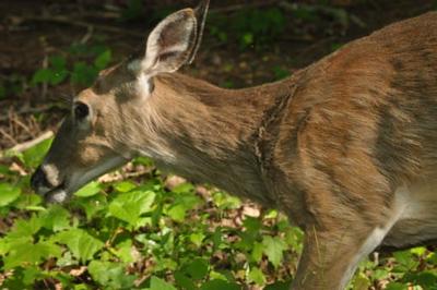 deer23424