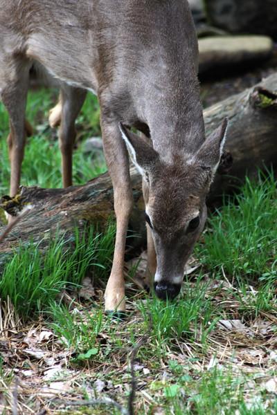 deer122
