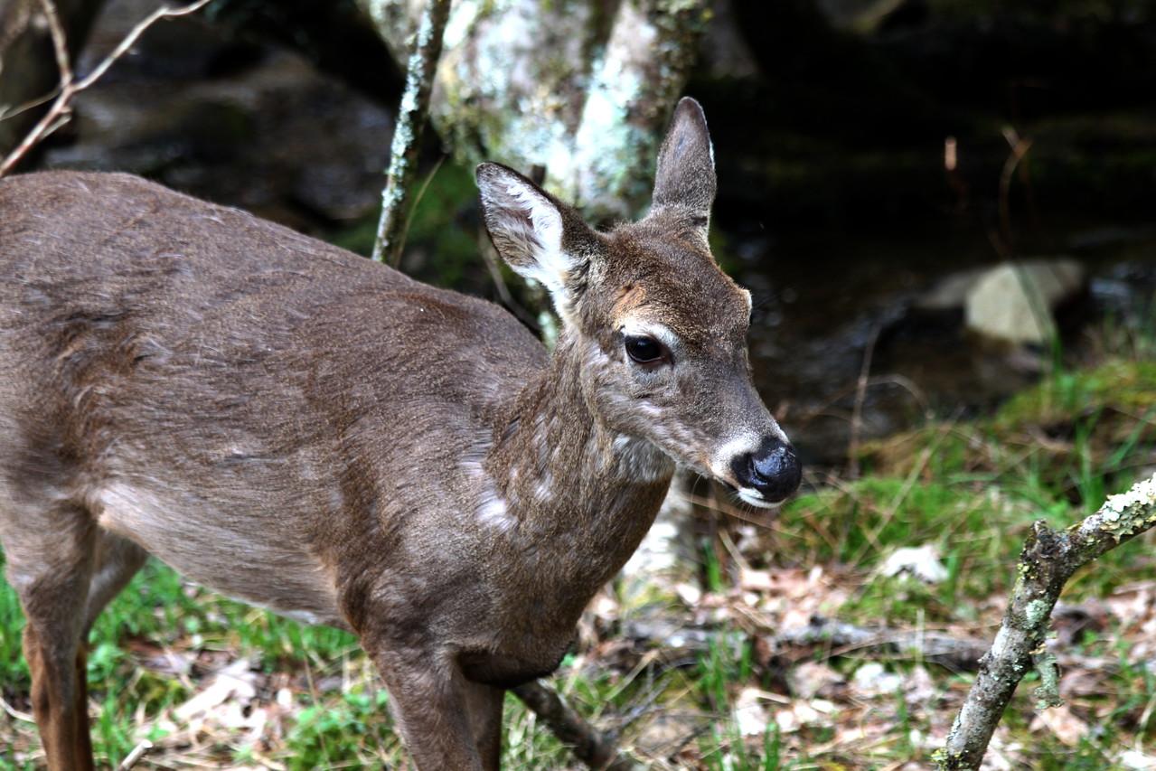 deer6013