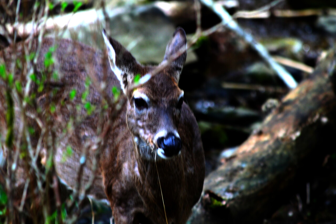 deer6012