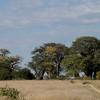 Baines Baobab Trees, Nxai GR