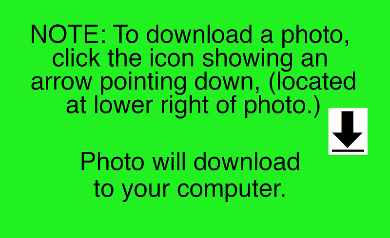 How to Download ONE photo Info copy