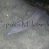 Puhi Kapa<br /> kalei nu'uhiwa