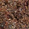 Phu Quoc Seaweed<br /> (c) Kuulei Kanahele<br /> Laehala