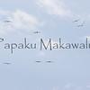Iwa.Pa Hoaka, Keaukaha<br /> One day before Hurricane Felicia scheduled to arrive.<br /> (c) Kuulei Kanahele