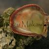 pupu<br /> (c) Kaumakaiwa Kealiikanakaoleohaililani