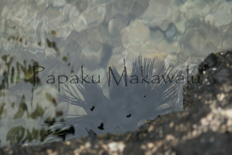 Wanaku<br /> (c) Kalei Nuuhiwa