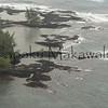 Kaulekahe<br /> (c) Pualani Kanahele