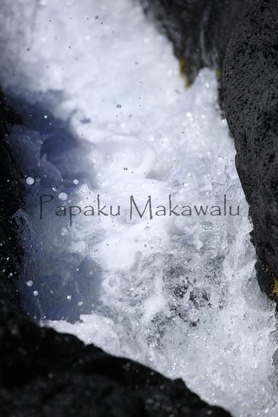 Limu Akiaki<br /> (c) Ulumauahi Kealiikanakaole